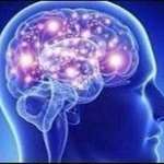 :brain1: